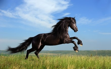 fondo_caballo